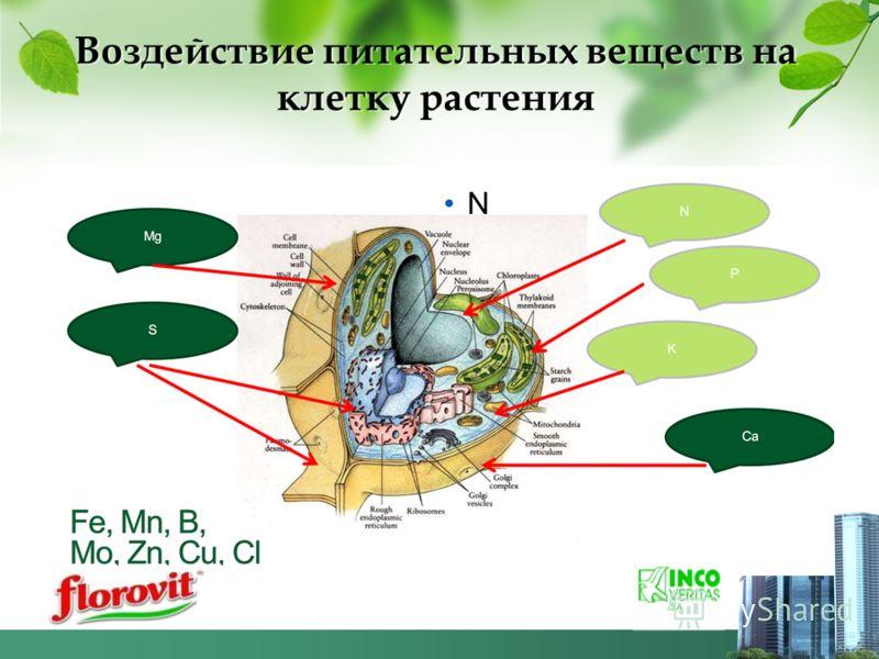 Воздействие питательных веществ на клетку растения