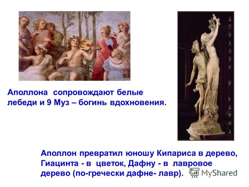 Аполлона сопровождают белые лебеди и 9 Муз – богинь вдохновения. Аполлон превратил юношу Кипариса в дерево, Гиацинта - в цветок, Дафну - в лавровое дерево (по-гречески дафне- лавр).