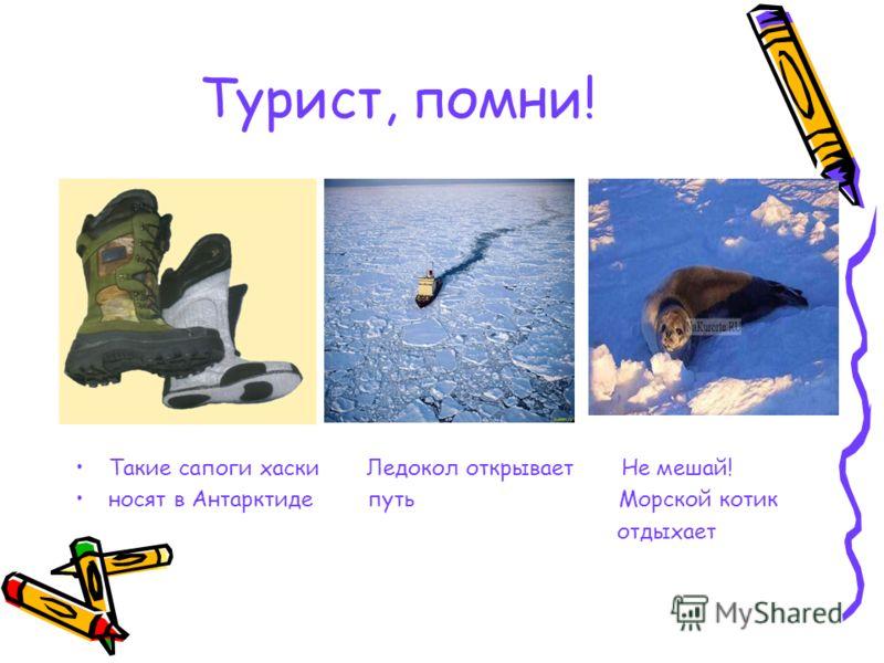 Турист, помни! Такие сапоги хаски Ледокол открывает Не мешай! носят в Антарктиде путь Морской котик отдыхает