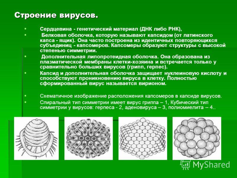 Все ли живые организмы имеют клеточную структуру? Для всех ли живых организмов характерны рассмотренные критерии жизни? Исследуем вирусы…