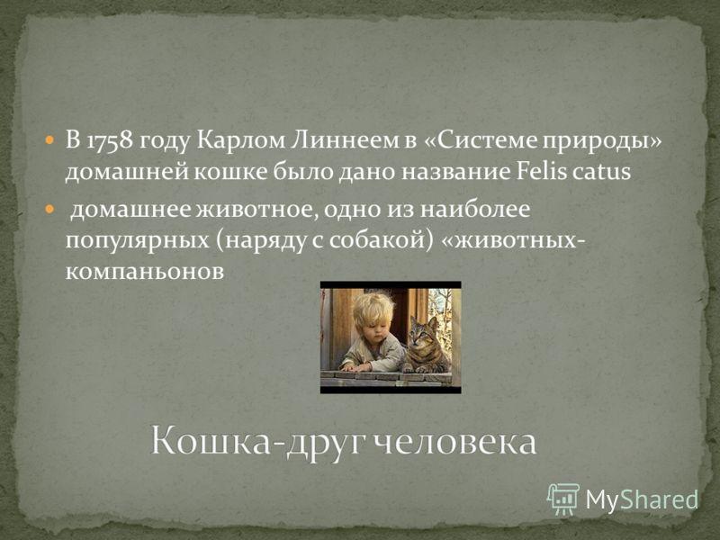 В 1758 году Карлом Линнеем в «Системе природы» домашней кошке было дано название Felis catus домашнее животное, одно из наиболее популярных (наряду с собакой) «животных- компаньонов