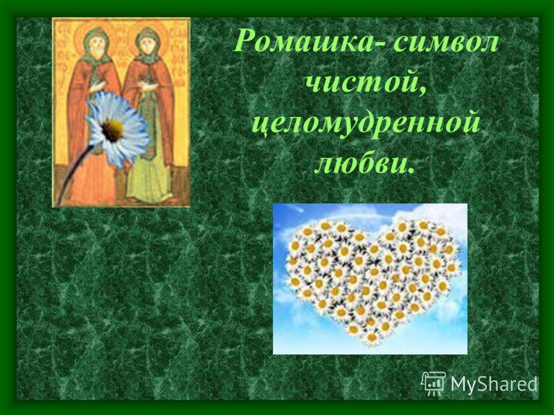 Ромашка- символ чистой, целомудренной любви.