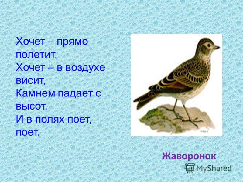 Хочет – прямо полетит, Хочет – в воздухе висит, Камнем падает с высот, И в полях поет, поет. Жаворонок