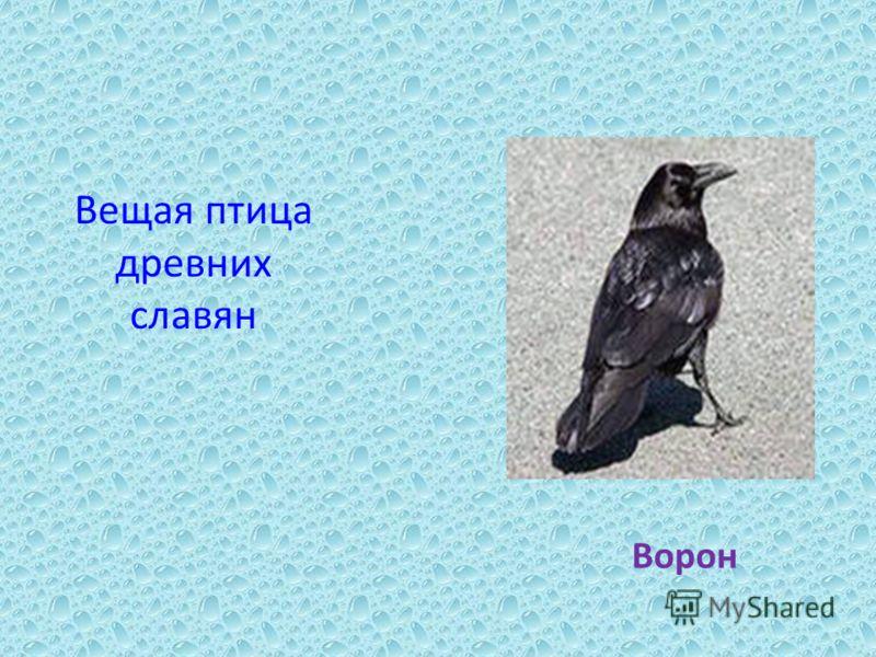 Вещая птица древних славян Ворон