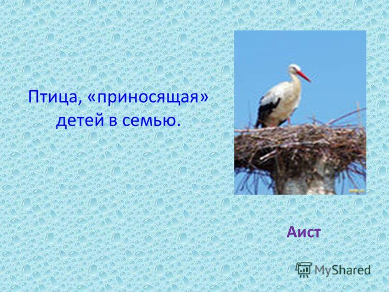 Птица, «приносящая» детей в семью. Аист