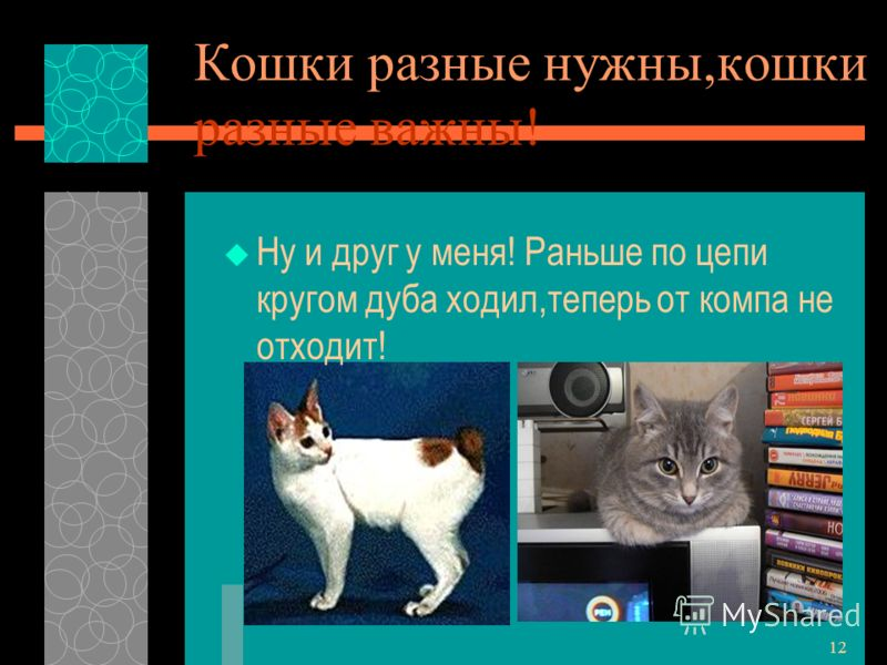 11 Заключение Собрали материал о кошках. Ответили на вопросы проекта: 1.В семьях учеников нашего класса-15 кошек. 2.14 из них европейской породы,1-сиамская кошка. 3.содержание кошки составляет примерно 4360рублей в год. Лучше кормить «Вискасом».Дешев