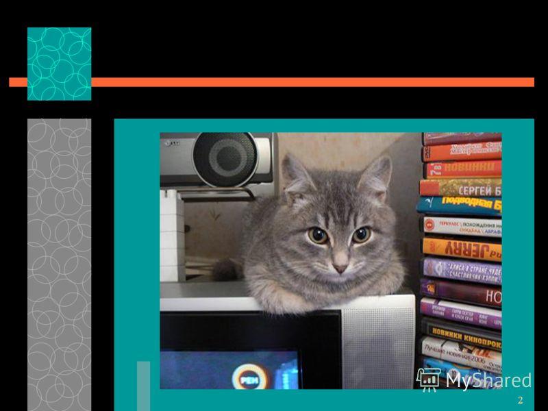 1 Проект «Слово о кошках