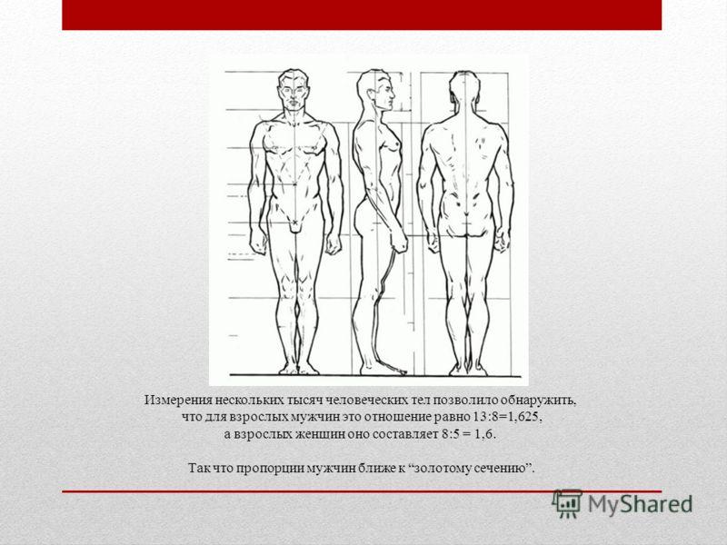 Измерения нескольких тысяч человеческих тел позволило обнаружить, что для взрослых мужчин это отношение равно 13:8=1,625, а взрослых женщин оно составляет 8:5 = 1,6. Так что пропорции мужчин ближе к золотому сечению.