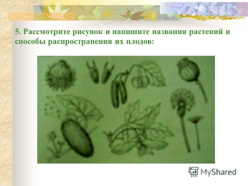 3. Напишите, как называются плоды перечисленных растений Омской области, а также укажите сочные они или сухие, односемянные или многосемянные. 1)Рябина - _________________. 2)Кабачок - ________________. 3)Смородина - ______________. 4)Кукуруза -_____