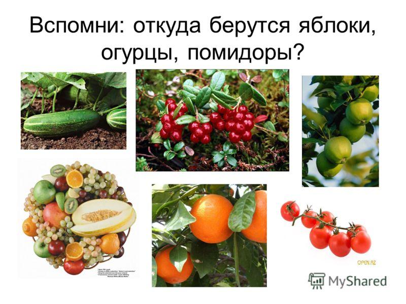 Вспомни: откуда берутся яблоки, огурцы, помидоры?