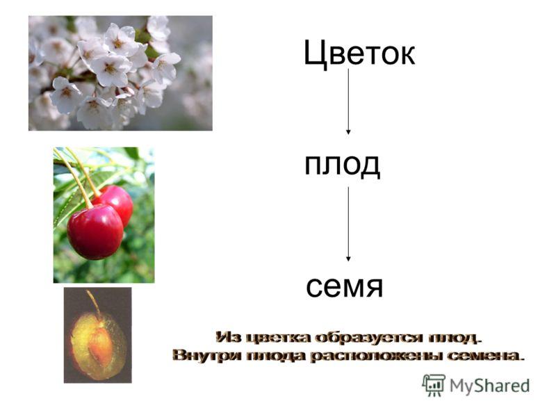 Цветок плод семя