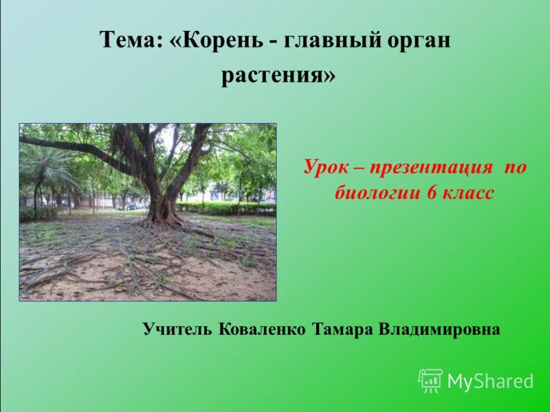 Тема: «Корень - главный орган растения» Урок – презентация по биологии 6 класс Учитель Коваленко Тамара Владимировна