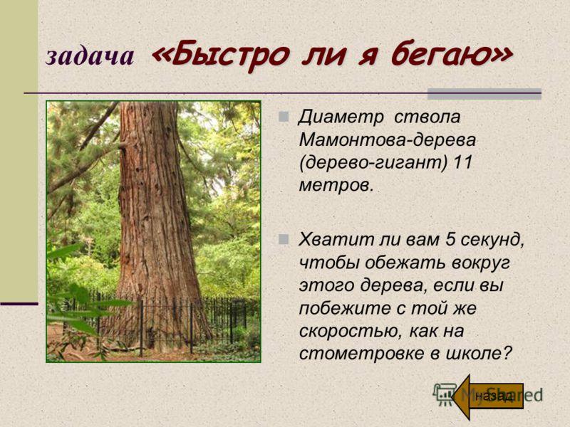 «Быстро ли я бегаю» задача «Быстро ли я бегаю» Диаметр ствола Мамонтова-дерева (дерево-гигант) 11 метров. Хватит ли вам 5 секунд, чтобы обежать вокруг этого дерева, если вы побежите с той же скоростью, как на стометровке в школе? назад