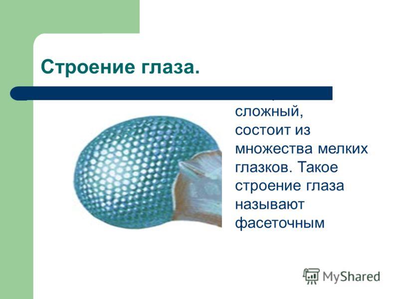 Строение глаза. Глаз рака сложный, состоит из множества мелких глазков. Такое строение глаза называют фасеточным