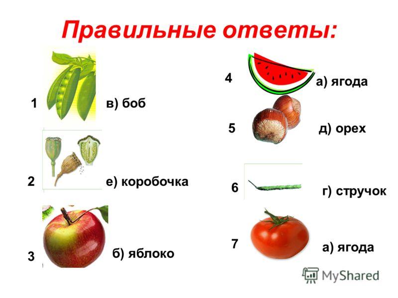 Правильные ответы: 1 2 3 4 5 6 7 а) ягода б) яблоко в) боб г) стручок д) орех е) коробочка а) ягода
