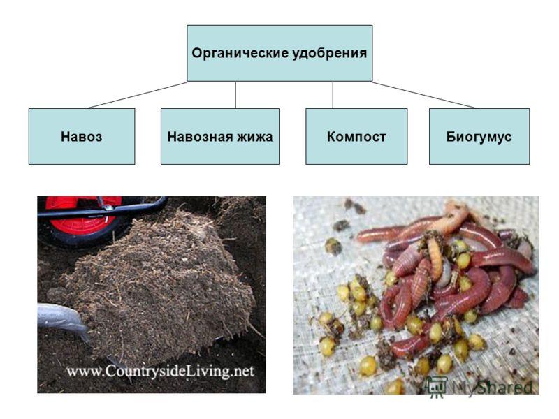 Органические удобрения НавозНавозная жижаКомпостБиогумус