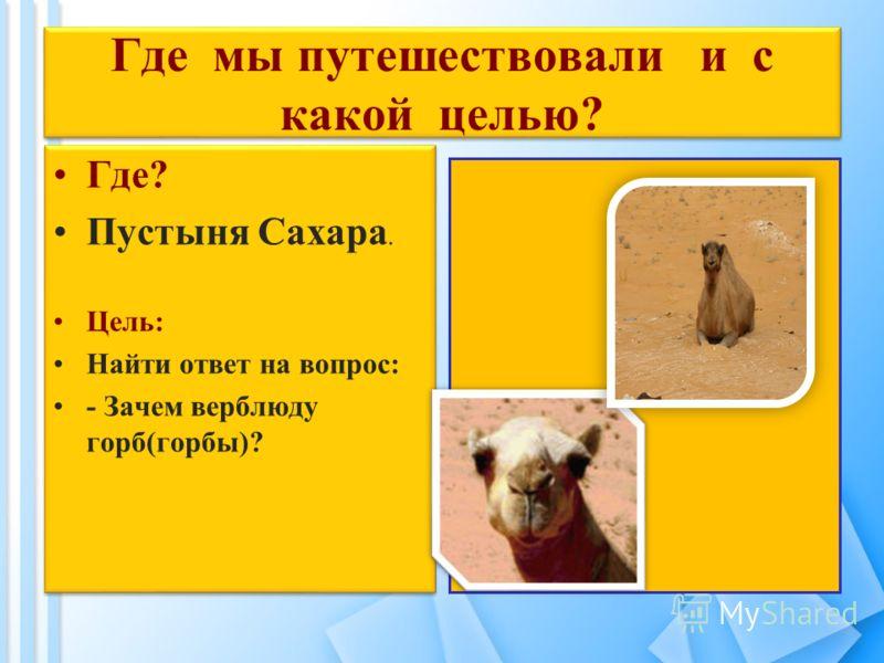 Где мы путешествовали и с какой целью? Где? Пустыня Сахара. Цель: Найти ответ на вопрос: - Зачем верблюду горб(горбы)? Где? Пустыня Сахара. Цель: Найти ответ на вопрос: - Зачем верблюду горб(горбы)?