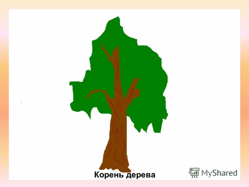 Корень дерева