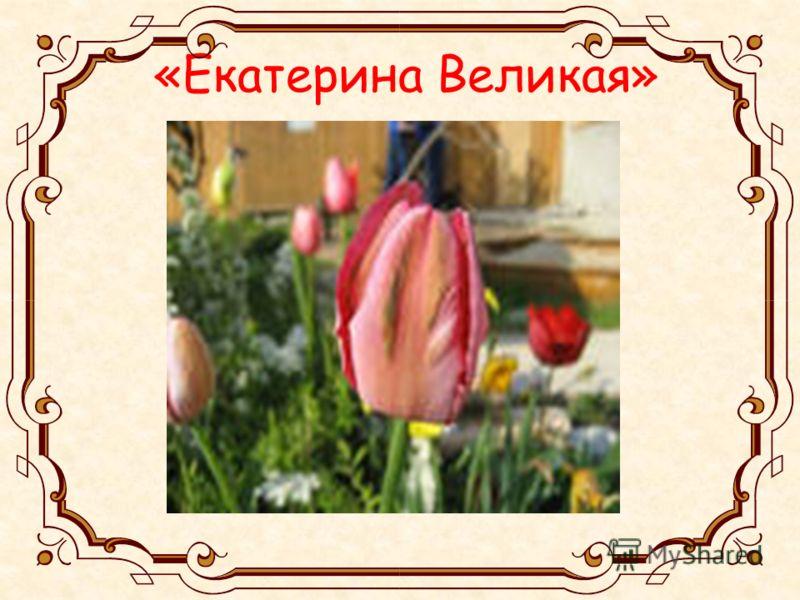 «Екатерина Великая»
