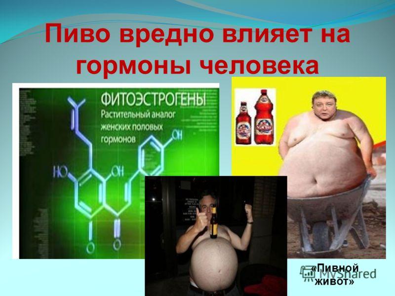 Пиво вредно влияет на гормоны человека «Пивной живот»