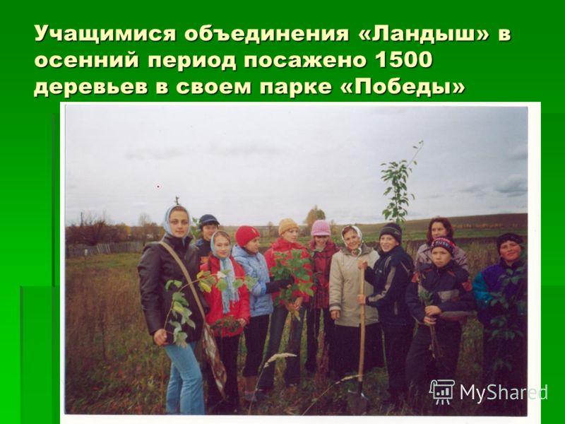 Учащимися объединения «Ландыш» в осенний период посажено 1500 деревьев в своем парке «Победы»