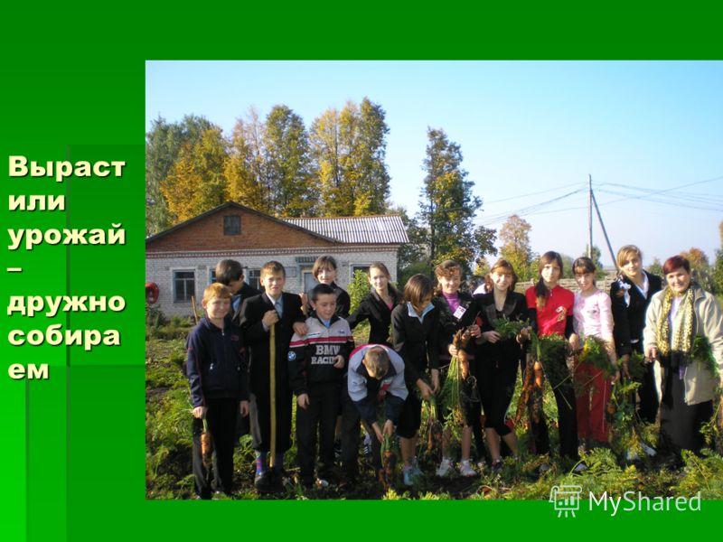 Выраст или урожай – дружно собира ем