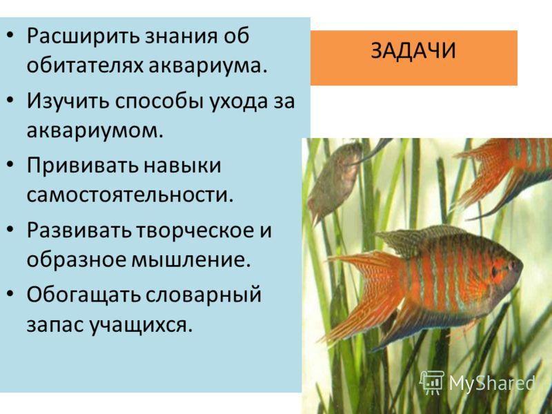 ЗАДАЧИ Расширить знания об обитателях аквариума. Изучить способы ухода за аквариумом. Прививать навыки самостоятельности. Развивать творческое и образное мышление. Обогащать словарный запас учащихся.