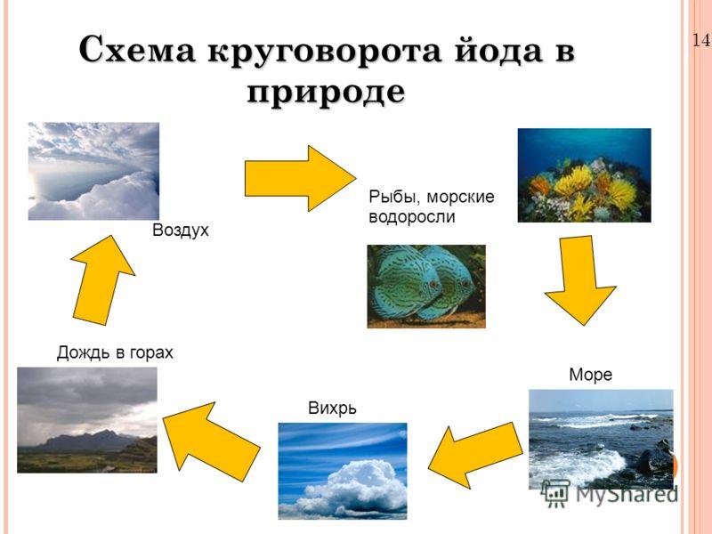 Схема круговорота йода в природе 14.4.11 Рыбы, морские водоросли Море Вихрь Дождь в горах Воздух