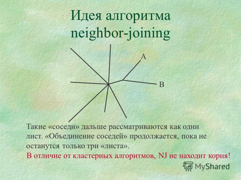 Идея алгоритма neighbor-joining Такие «соседи» дальше рассматриваются как один лист. «Объединение соседей» продолжается, пока не останутся только три «листа». A B В отличие от кластерных алгоритмов, NJ не находит корня!