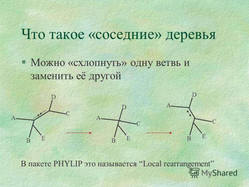Что такое «соседние» деревья §Можно «схлопнуть» одну ветвь и заменить её другой D B E C A В пакете PHYLIP это называется Local rearrangement D B E C A D B E C A