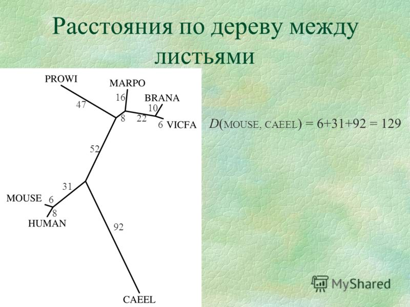 Расстояния по дереву между листьями 6 10 22 16 8 47 52 8 6 31 92 D( MOUSE, CAEEL ) = 6+31+92 = 129