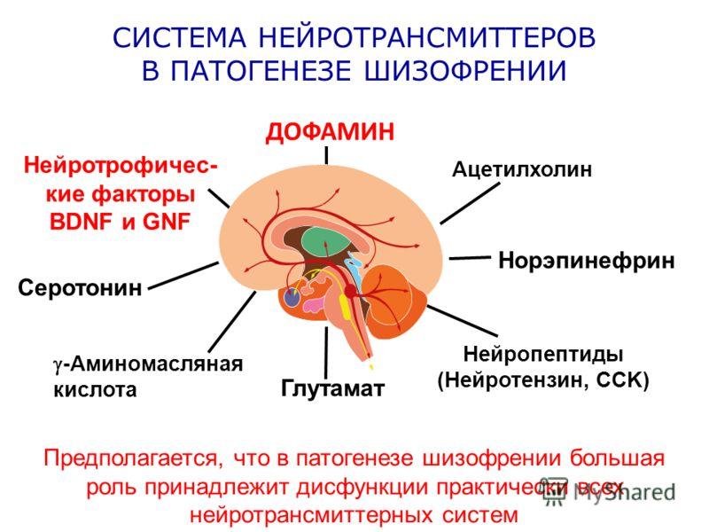 СИСТЕМА НЕЙРОТРАНСМИТТЕРОВ В ПАТОГЕНЕЗЕ ШИЗОФРЕНИИ Предполагается, что в патогенезе шизофрении большая роль принадлежит дисфункции практически всех нейротрансмиттерных систем Глутамат Нейропептиды (Нейротензин, CCK) Норэпинефрин Ацетилхолин Нейротроф