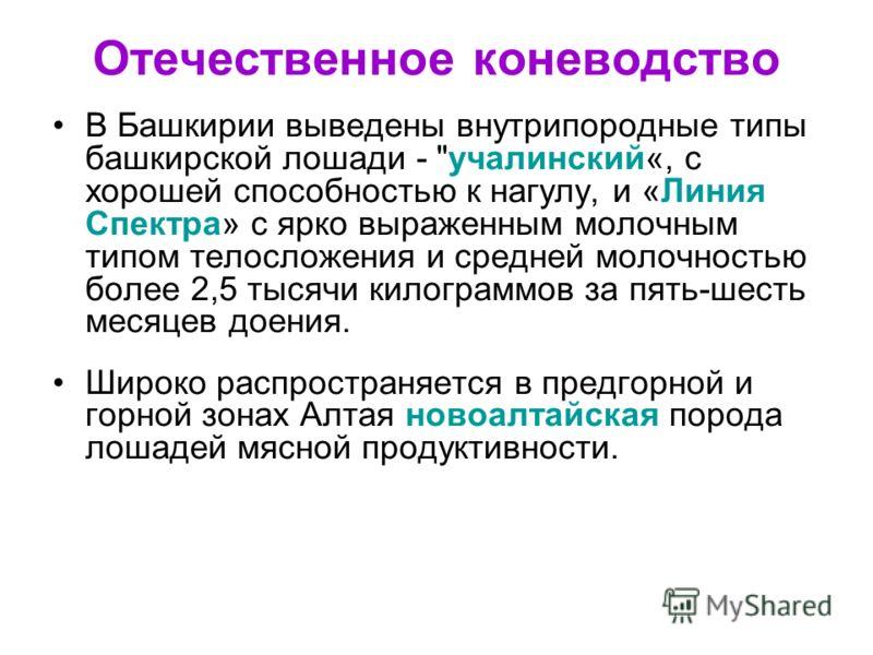 Отечественное коневодство В Башкирии выведены внутрипородные типы башкирской лошади -