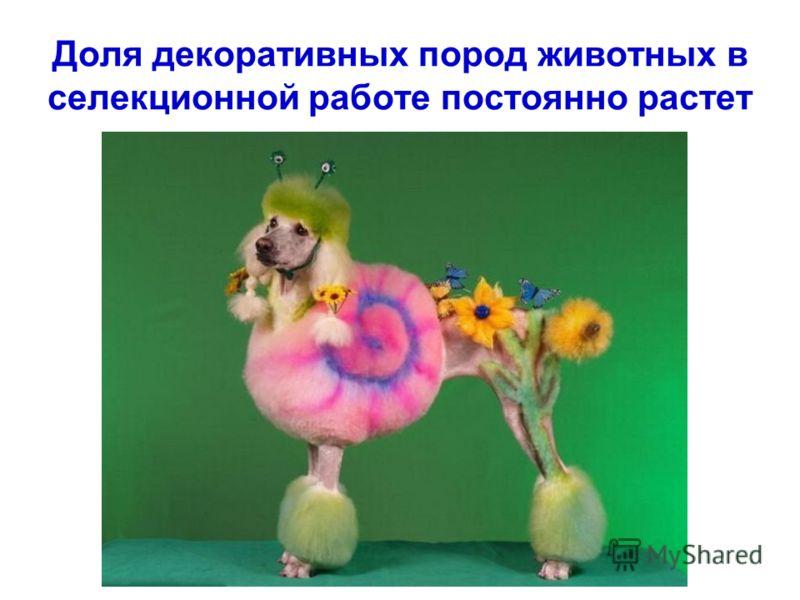 Доля декоративных пород животных в селекционной работе постоянно растет