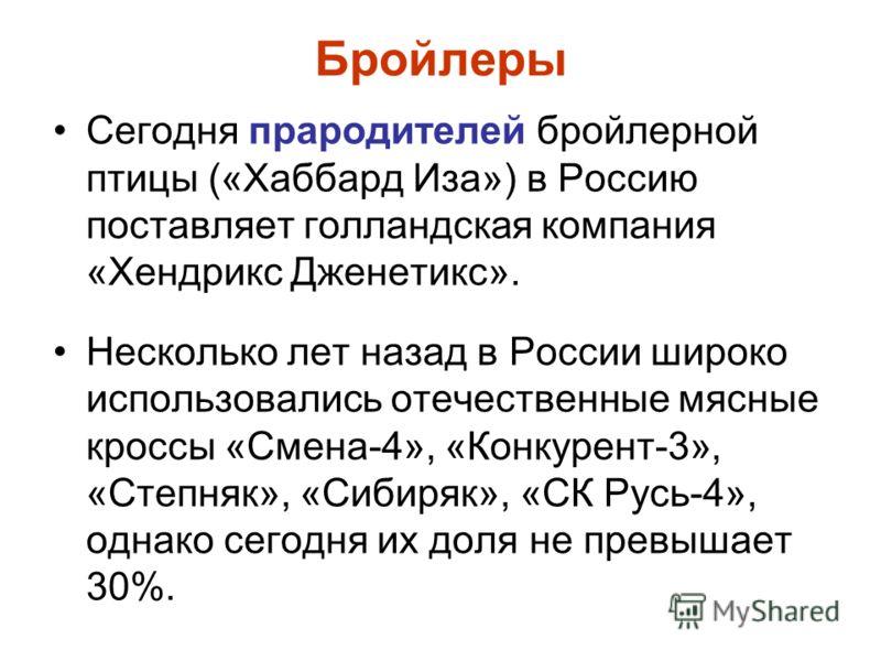 Бройлеры Сегодня прародителей бройлерной птицы («Хаббард Иза») в Россию поставляет голландская компания «Хендрикс Дженетикс». Несколько лет назад в России широко использовались отечественные мясные кроссы «Смена-4», «Конкурент-3», «Степняк», «Сибиряк