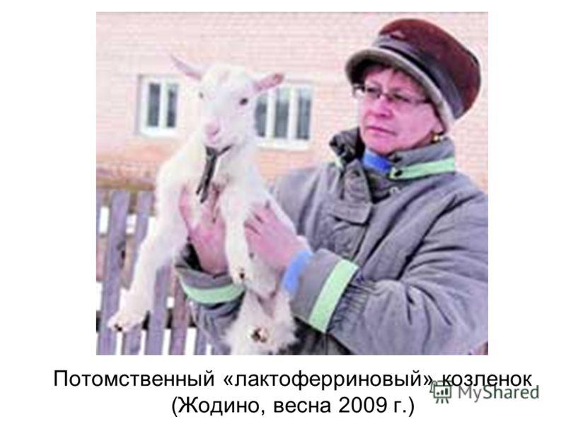 Потомственный «лактоферриновый» козленок (Жодино, весна 2009 г.)