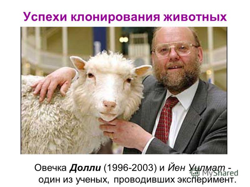 Успехи клонирования животных Овечка Долли (1996-2003) и Йен Уилмат - один из ученых, проводивших эксперимент.