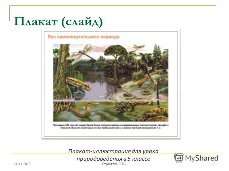 Плакат (слайд) Плакат-иллюстрация для урока природоведения в 5 классе 21.11.201222 Стрюкова Е.Ю.