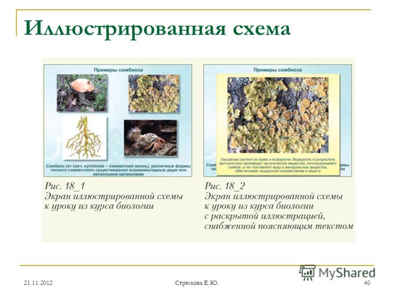 Иллюстрированная схема 21.11.201240 Стрюкова Е.Ю.