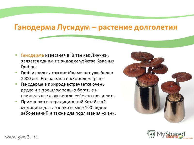 www.gew2u.ru Ганодерма Лусидум – растение долголетия Ганодерма известная в Китае как Линчжи, является одним из видов семейства Красных Грибов. Гриб используется китайцами вот уже более 2000 лет. Его называют «Королем Трав» Ганодерма в природе встреча