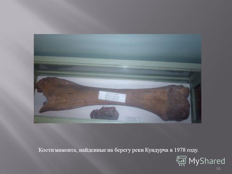Кости мамонта, найденные на берегу реки Кундурча в 1978 году. 10