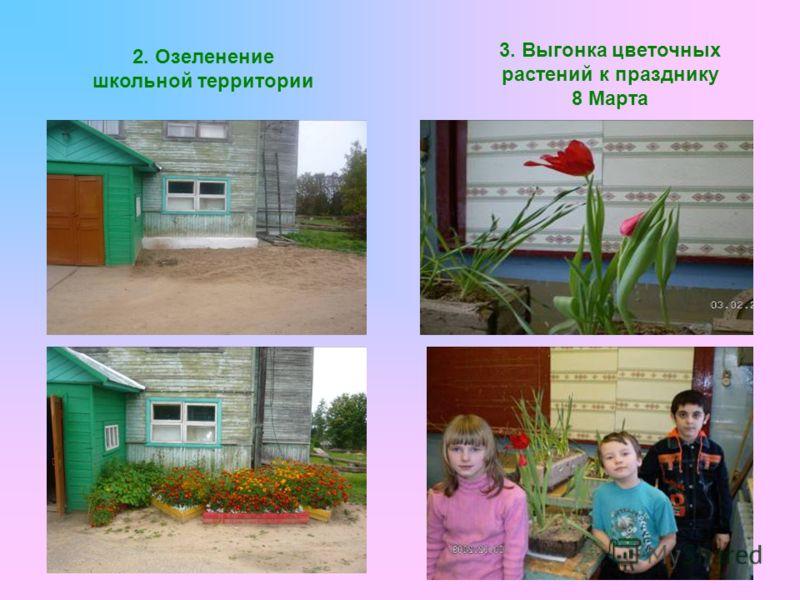 2. Озеленение школьной территории 3. Выгонка цветочных растений к празднику 8 Марта