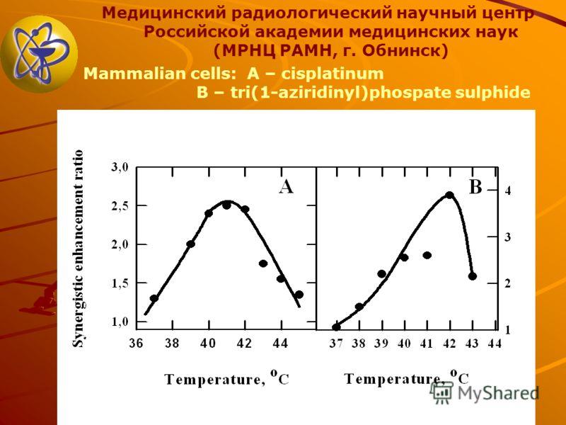 Медицинский радиологический научный центр Российской академии медицинских наук (МРНЦ РАМН, г. Обнинск) Mammalian cells: A – cisplatinum B – tri(1-aziridinyl)phospate sulphide