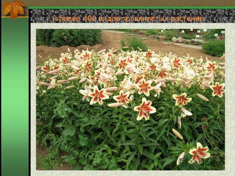и более 400 видов травянистых растений.