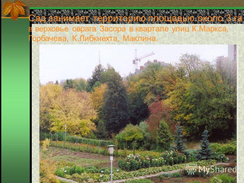 Сад занимает территорию площадью около 3 га в верховье оврага Засора в квартале улиц К.Маркса, Горбачева, К.Либкнехта, Маклина.
