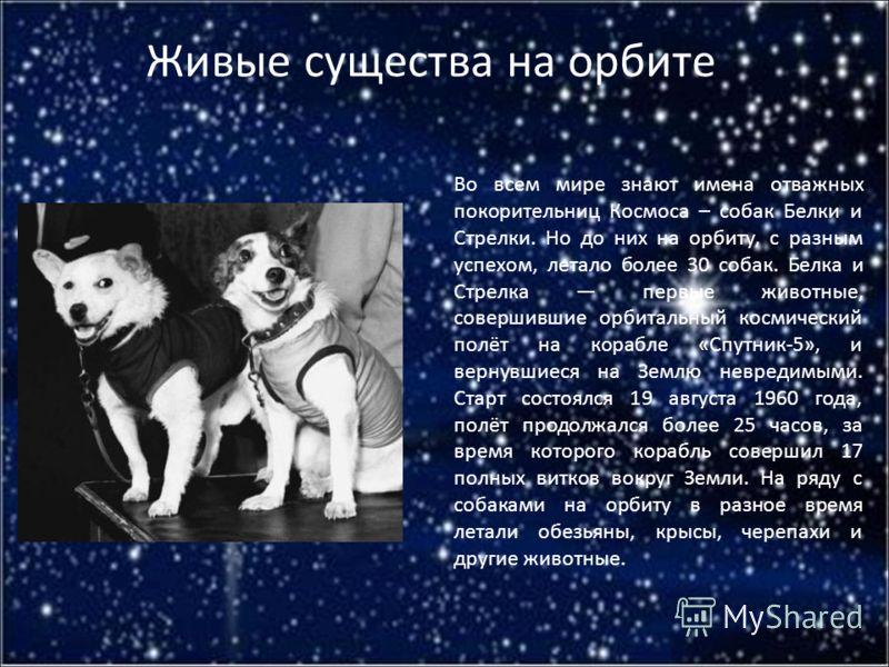 Живые существа на орбите Во всем мире знают имена отважных покорительниц Космоса – собак Белки и Стрелки. Но до них на орбиту, с разным успехом, летало более 30 собак. Белка и Стрелка первые животные, совершившие орбитальный космический полёт на кора