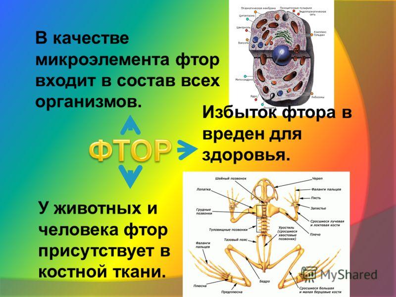 В качестве микроэлемента фтор входит в состав всех организмов. У животных и человека фтор присутствует в костной ткани. Избыток фтора в вреден для здоровья.