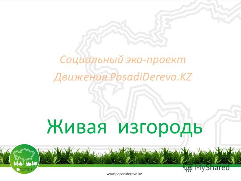 Живая изгородь Социальный эко-проект Движения PosadiDerevo.KZ