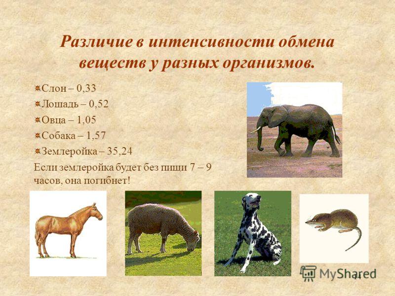 14 Различие в интенсивности обмена веществ у разных организмов. Слон – 0,33 Лошадь – 0,52 Овца – 1,05 Собака – 1,57 Землеройка – 35,24 Если землеройка будет без пищи 7 – 9 часов, она погибнет!