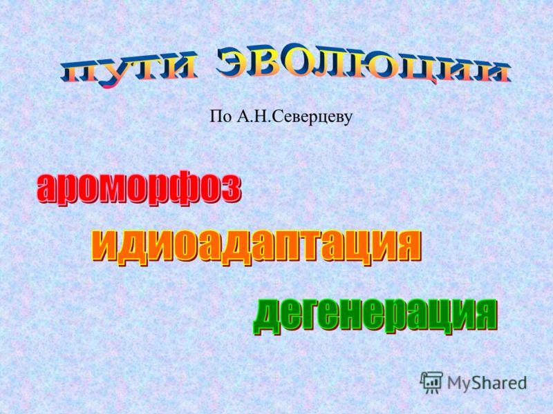 По А.Н.Северцеву